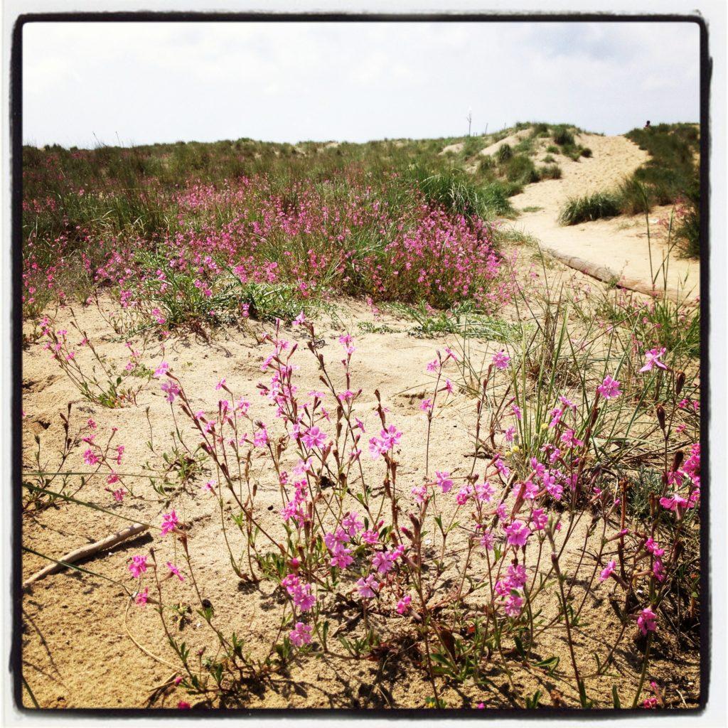 dune spiaggia di viareggio