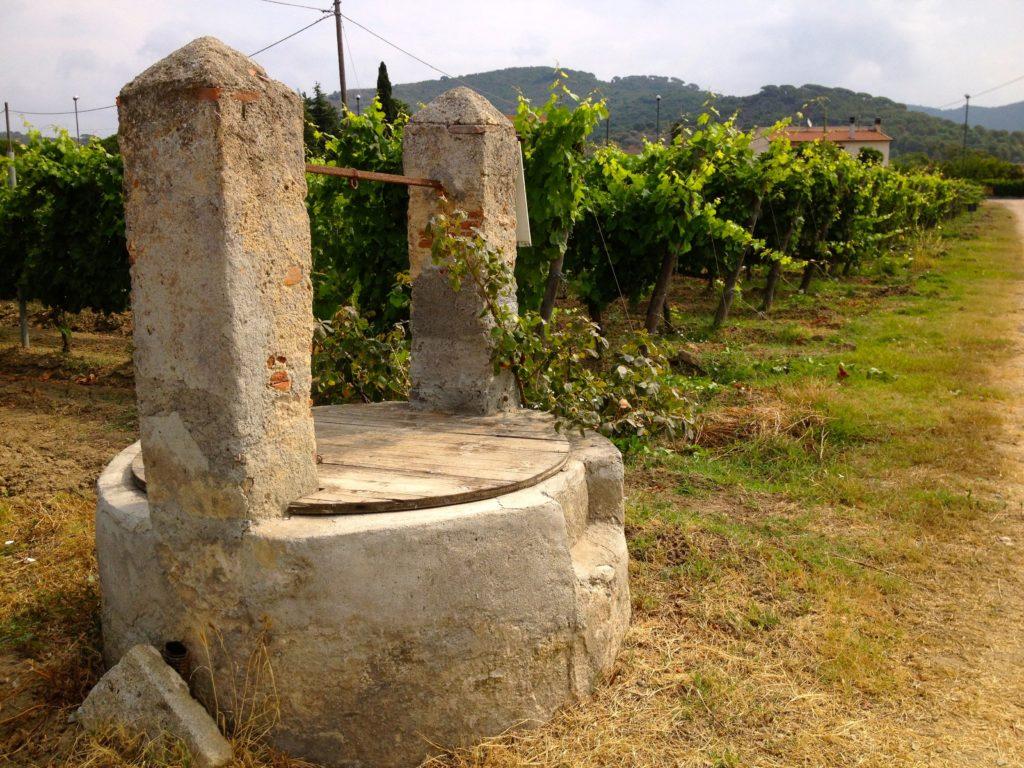 Vigne - Az. Agricola Cecilia